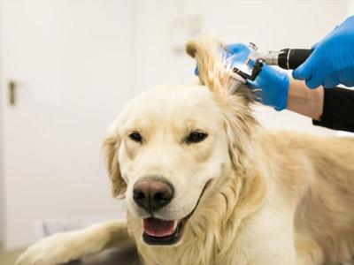 veterinarias-seguros